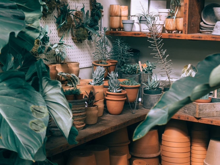 free PNG plants, indoor plants, pots, cultivation, shelves, ceramics background PNG images transparent