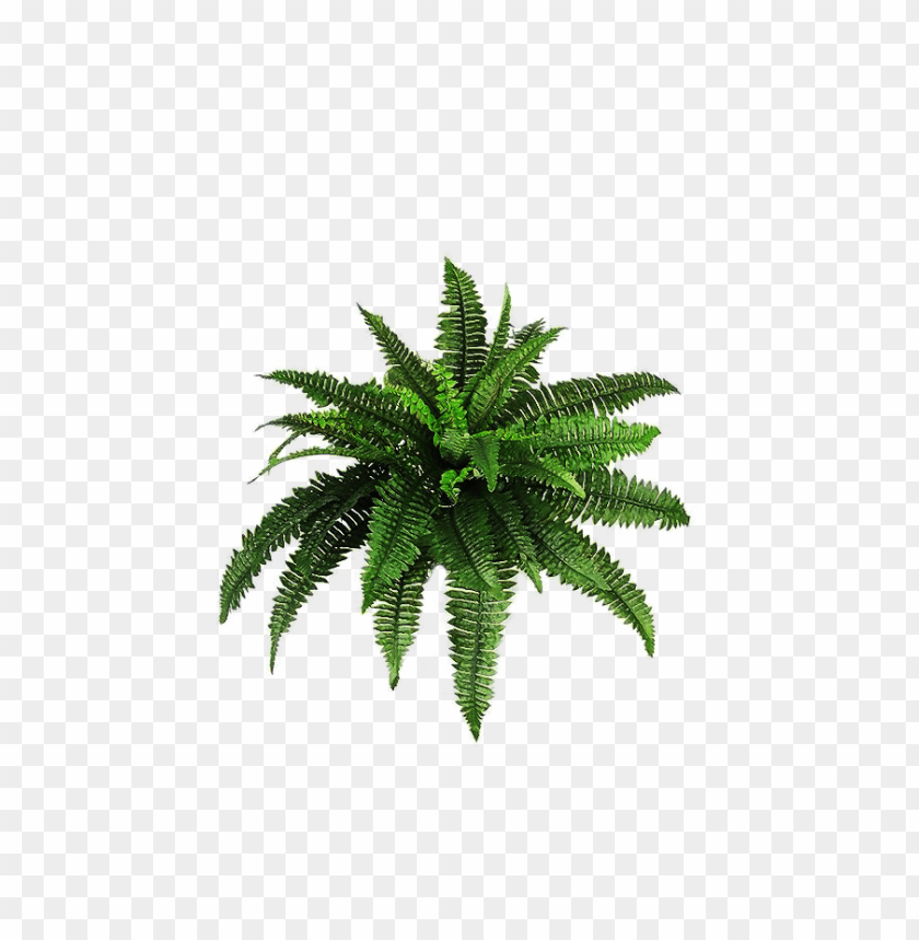 free PNG Download plants png pic png images background PNG images transparent