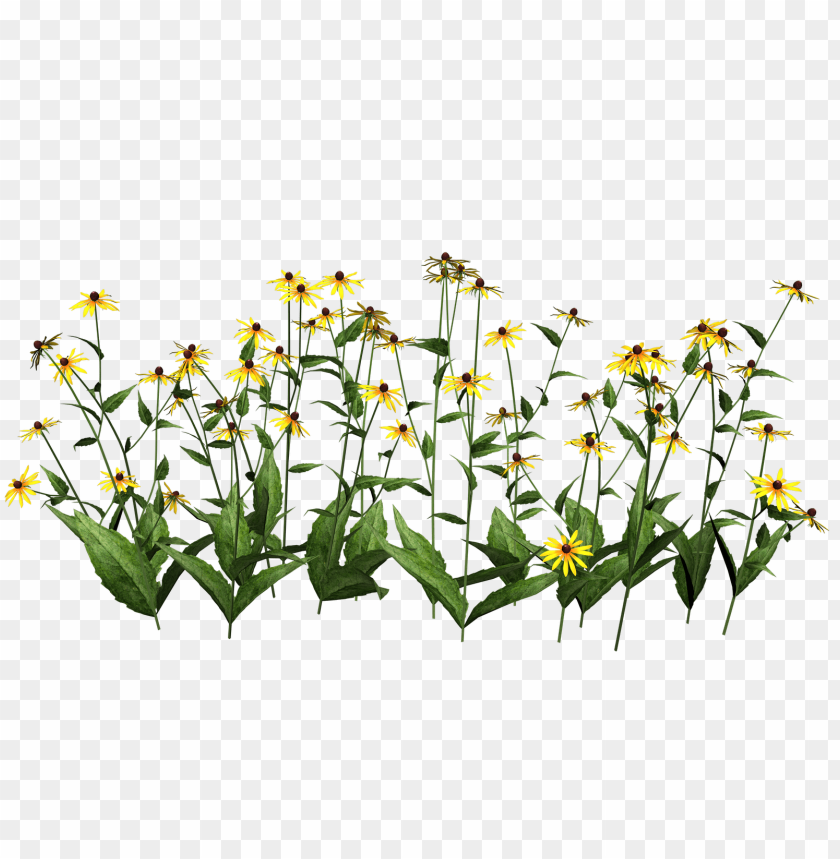 free PNG Download plants transparent png images background PNG images transparent