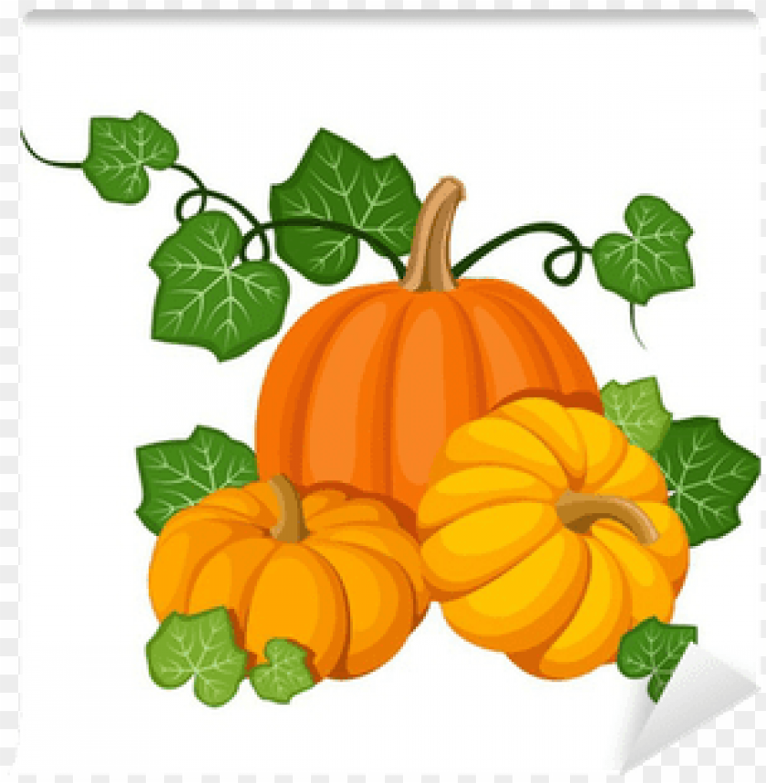 free PNG pumpkin with leaves PNG image with transparent background PNG images transparent