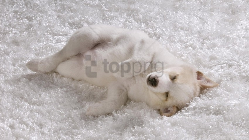 free PNG puppy, shaggy rug, white dog wallpaper background best stock photos PNG images transparent