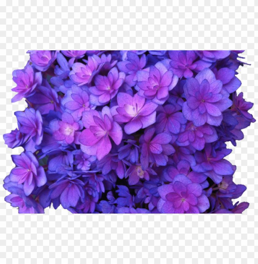 free PNG purple flower transparent PNG image with transparent background PNG images transparent