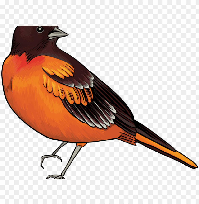 Quail clipart, Quail Transparent FREE for download on WebStockReview 2020
