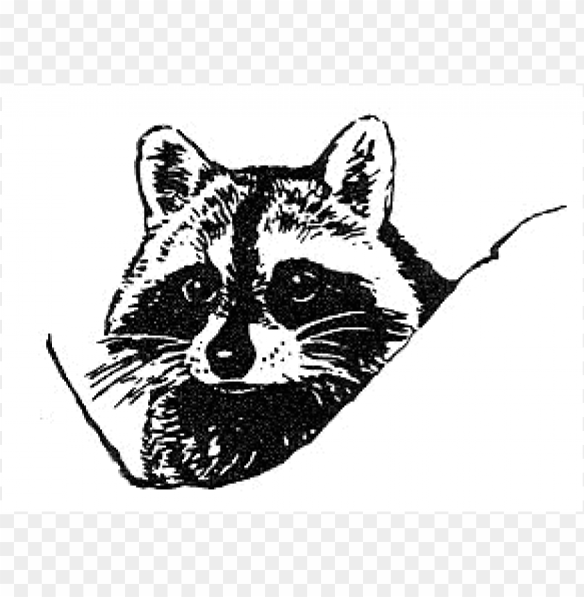 free PNG raccoon face PNG image with transparent background PNG images transparent