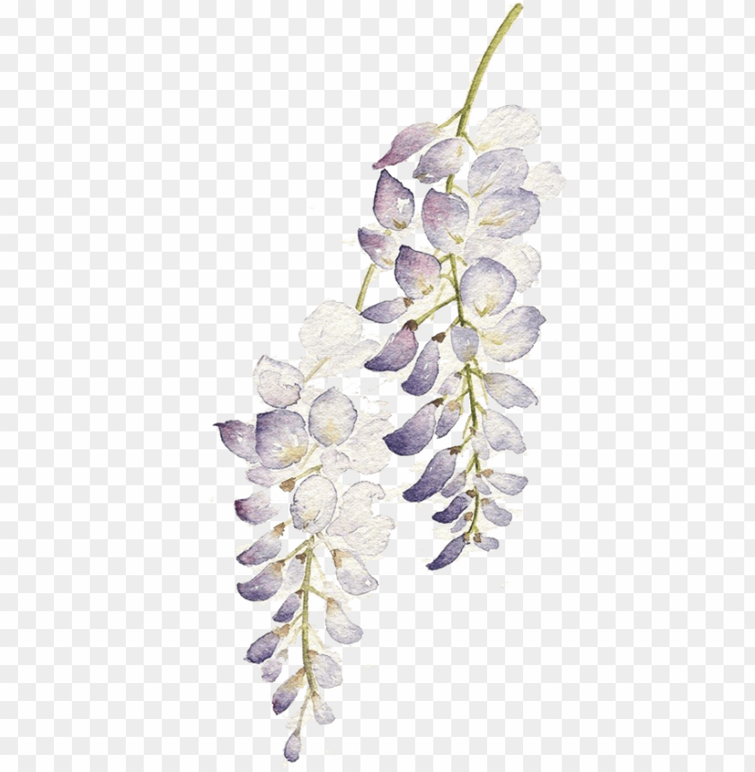 free PNG raphic flowers watercolour painting purple flower - watercolor purple flowers PNG image with transparent background PNG images transparent