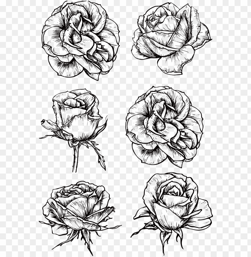 free PNG raphic rose flower black and white roses transprent - black and white roses PNG image with transparent background PNG images transparent