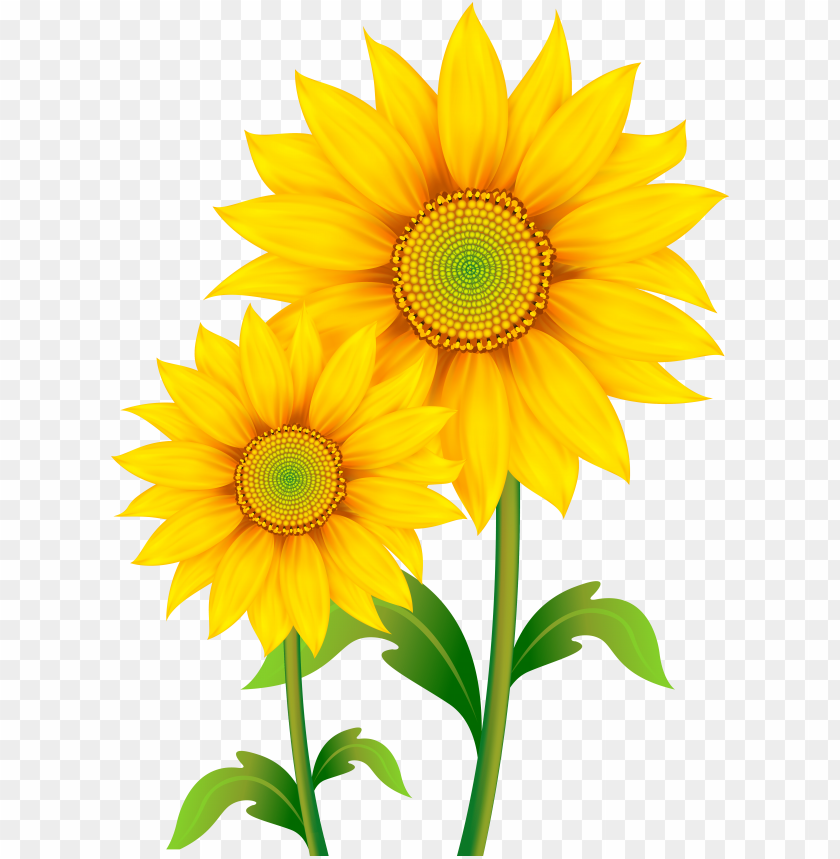 Image result for sunflower clipart