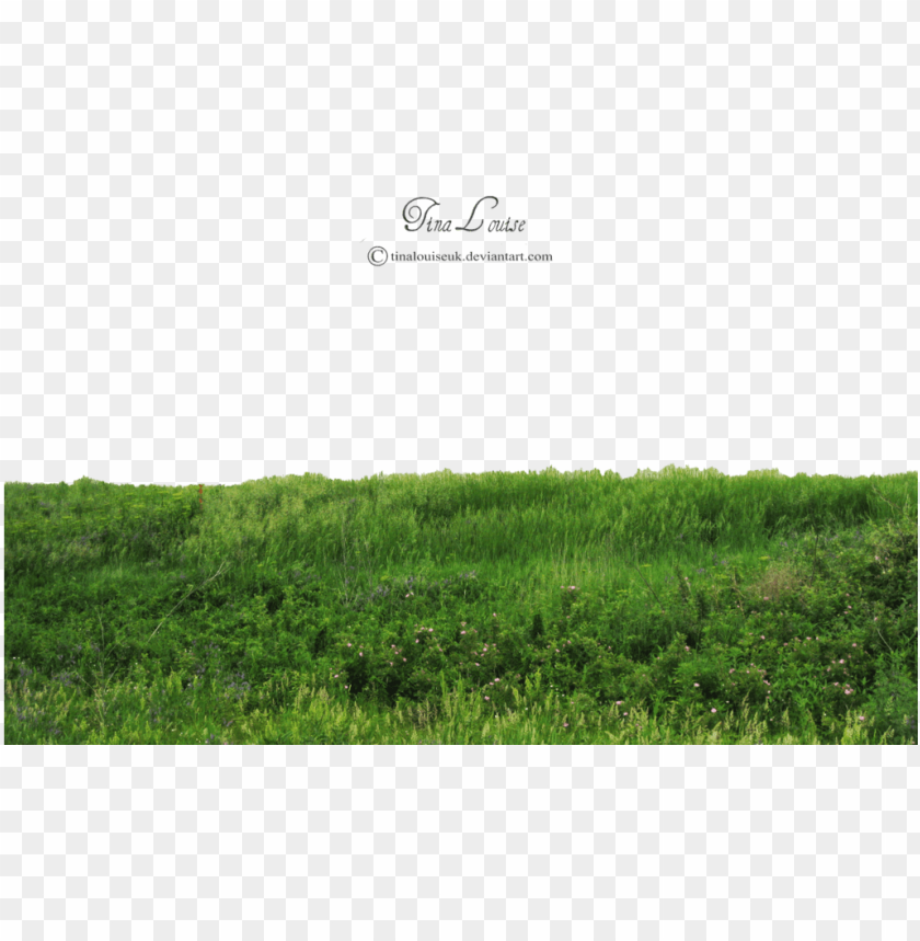 free PNG rass photoshop, photoshop help, photoshop photography, - grass PNG image with transparent background PNG images transparent