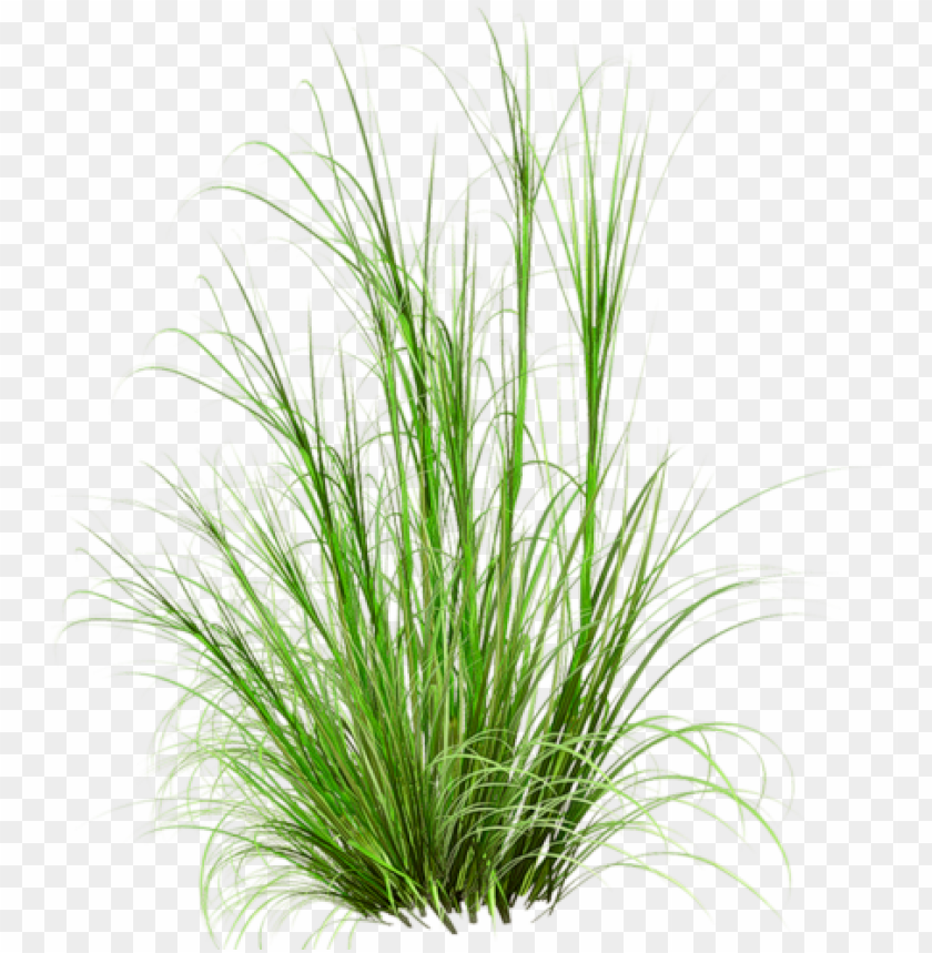 free PNG rass photoshop, photoshop images, tree psd, photoshop - herbes PNG image with transparent background PNG images transparent