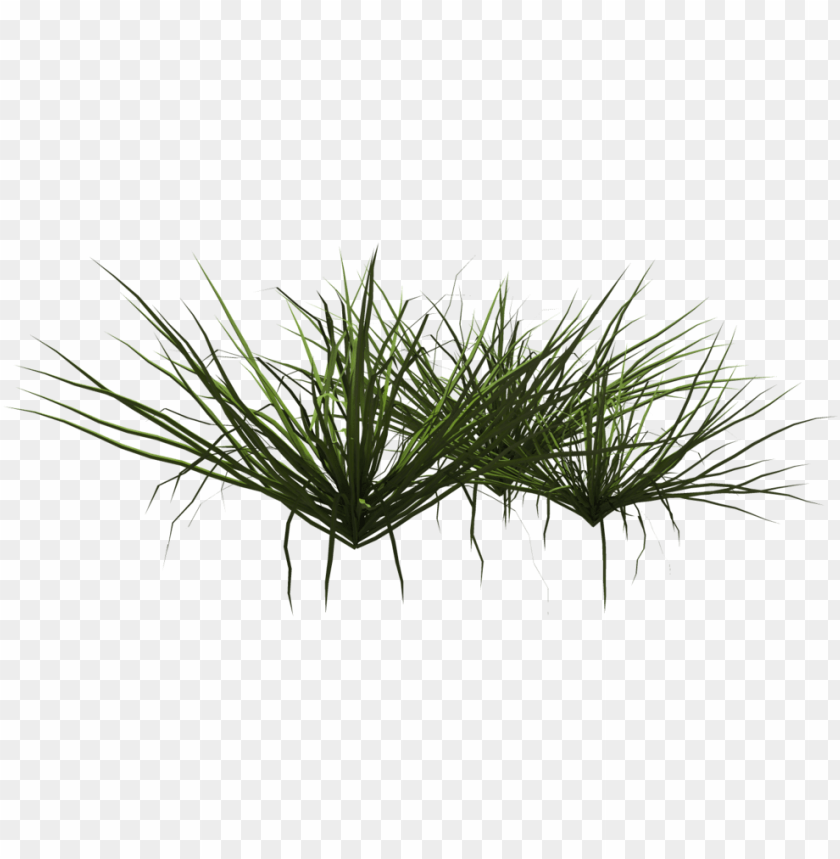 Rass Shrub Png Grass Shrubs Png Image With Transparent