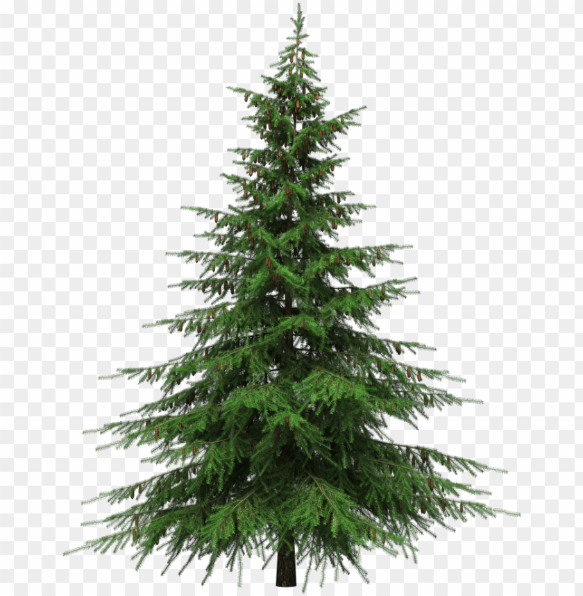 Real Christmas Tree Png Natural Cut Artificial Christmas Trees Png Image With Transparent Background Toppng Collection of christmas trees png (23). real christmas tree png natural cut