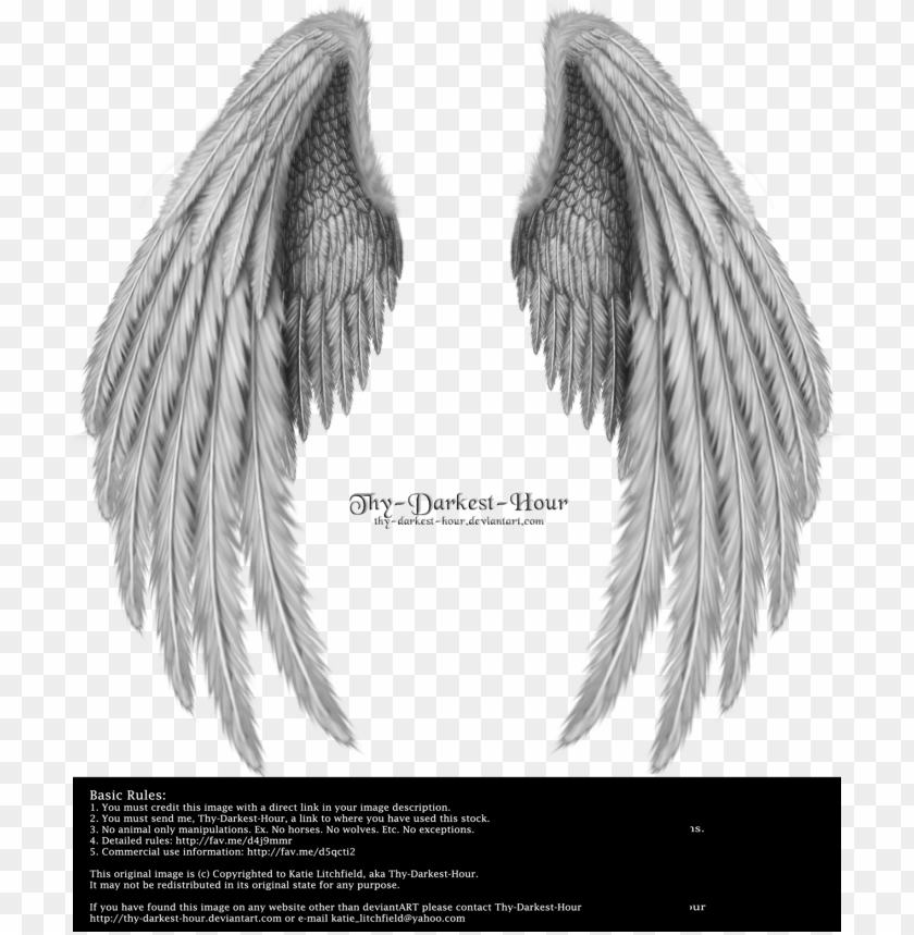 free PNG realistic angel wings side view download - folded wings PNG image with transparent background PNG images transparent