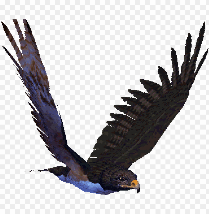 free PNG reat animated eagle gifs at best animations - flying hawk animated gif PNG image with transparent background PNG images transparent