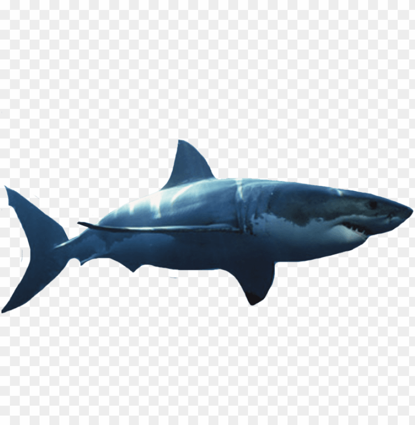 free PNG reat white shark - great white shark transparent background PNG image with transparent background PNG images transparent
