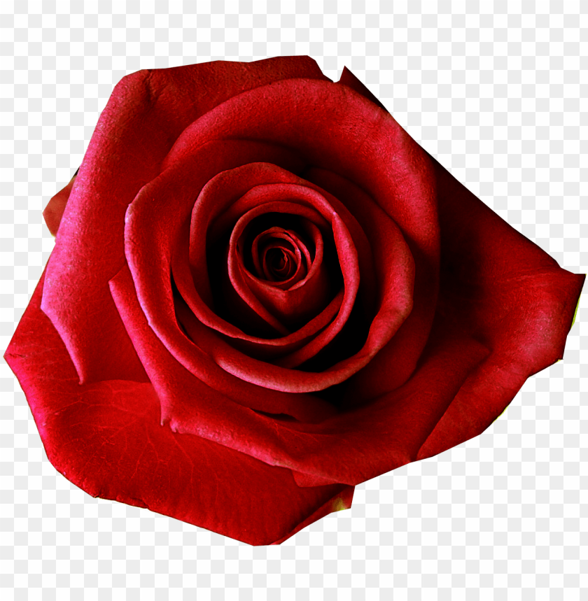 free PNG red flower clipart flower transparent background - transparent background red rose PNG image with transparent background PNG images transparent