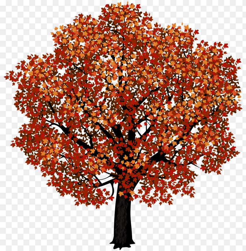 free PNG red maple tree png clipart picture - red maple tree clip art PNG image with transparent background PNG images transparent