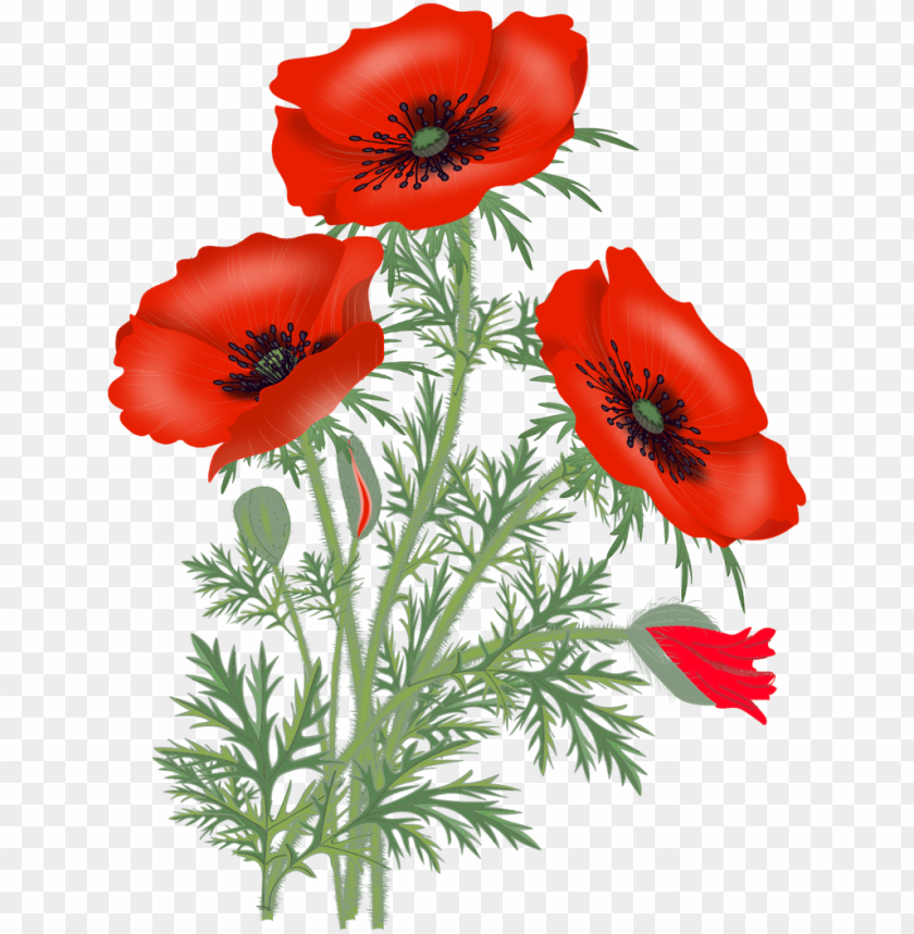 free PNG red poppies, poppy flowers, flower pictures, flower - red poppy flower PNG image with transparent background PNG images transparent