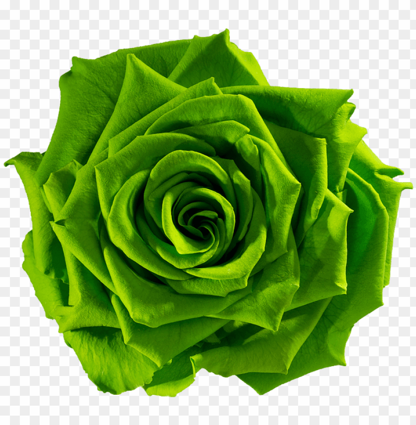 free PNG reen flower png download green flower png download - green rose flower PNG image with transparent background PNG images transparent