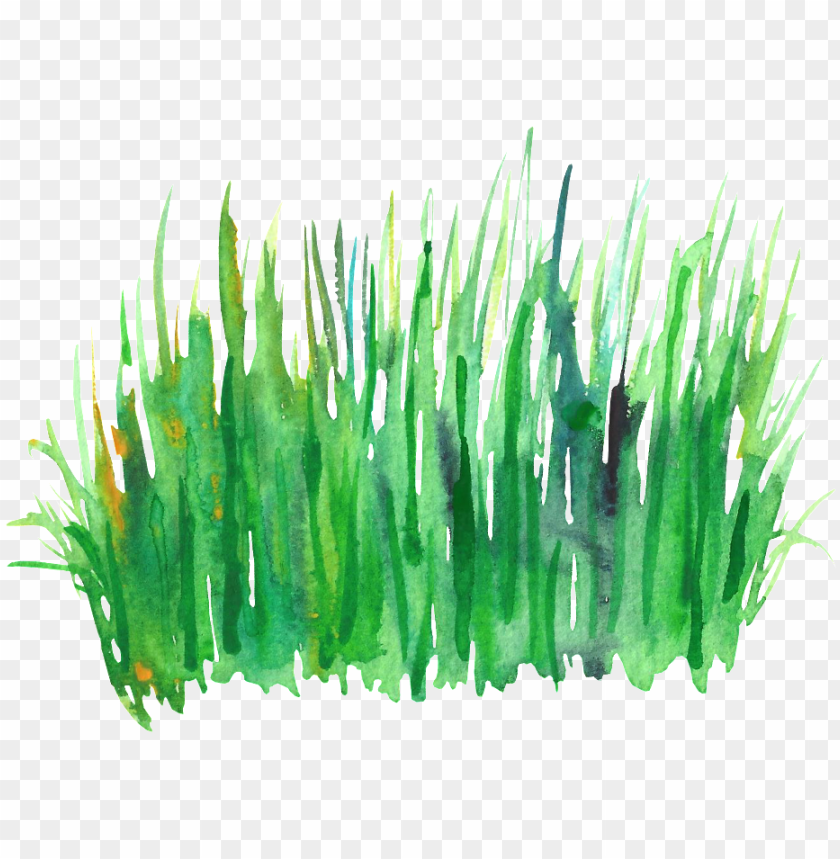 free PNG reen grass cluster transparent decorative - green watercolor grass PNG image with transparent background PNG images transparent