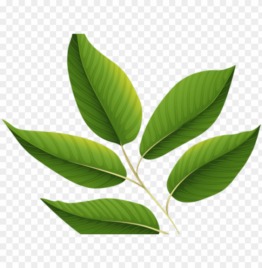 free PNG reen leaves clipart jungle leaf - green leaf transparent background PNG image with transparent background PNG images transparent