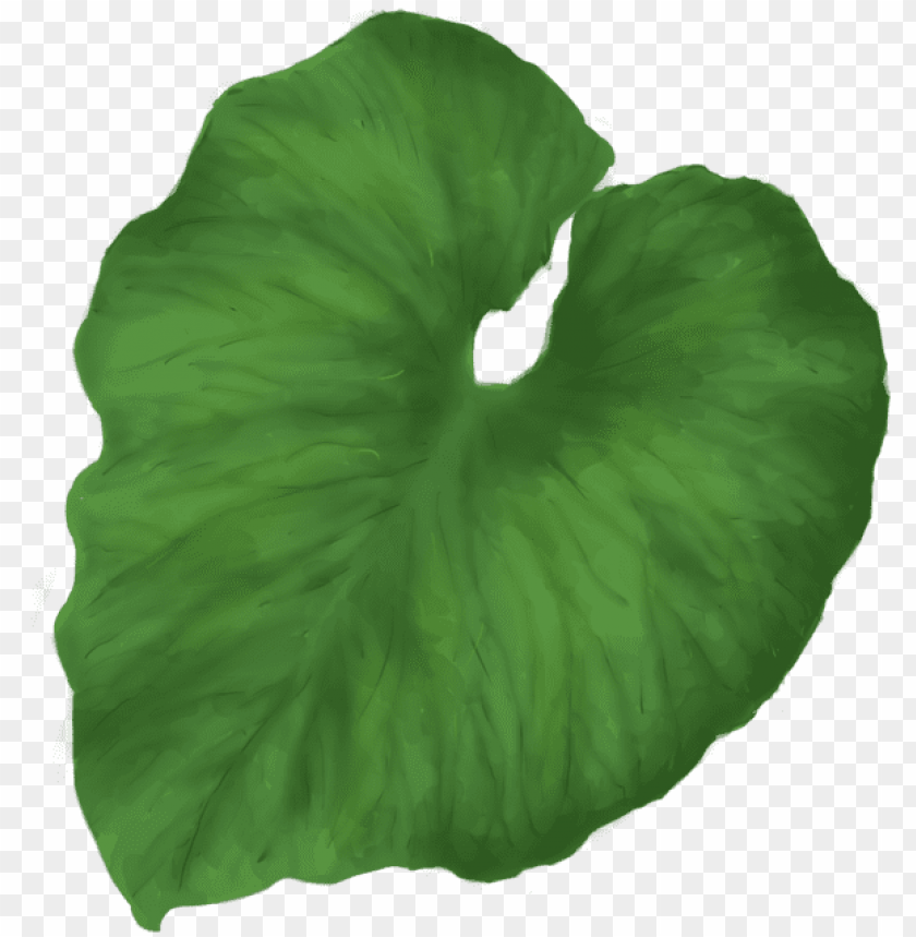 free PNG reen leaves thirty nine isolated stock photo - tropical leaf no background PNG image with transparent background PNG images transparent