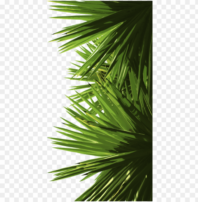 free PNG reen palm leaves, green, palm, leaf png and psd - portable network graphics PNG image with transparent background PNG images transparent