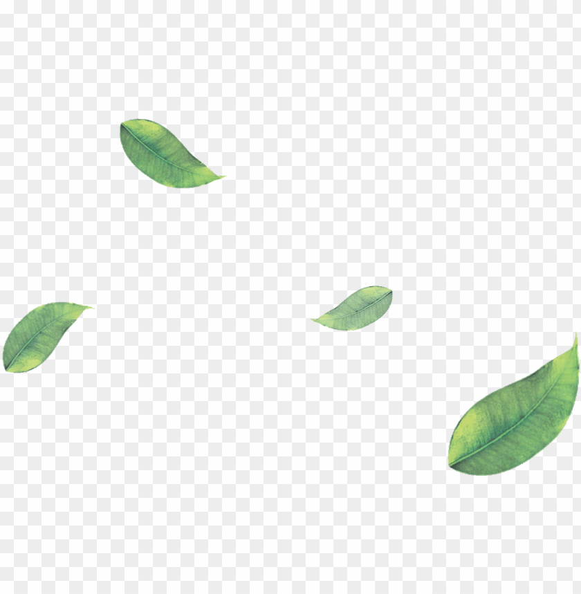 free PNG reen tea leaves png image library library - floating leaves png transparent PNG image with transparent background PNG images transparent