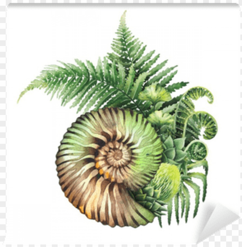 free PNG rehistoric watercolor seashell and fern branches wall - fern graphic PNG image with transparent background PNG images transparent