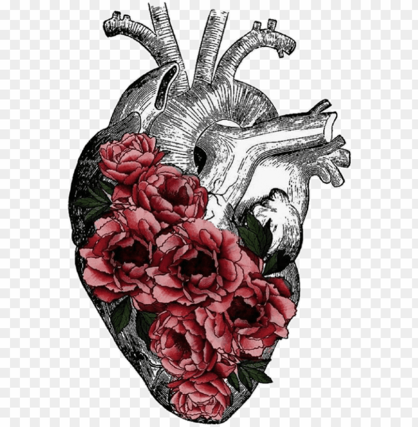 free PNG replace veins with tree roots anatomy art, heart anatomy - human heart flowers drawing transparent PNG image with transparent background PNG images transparent