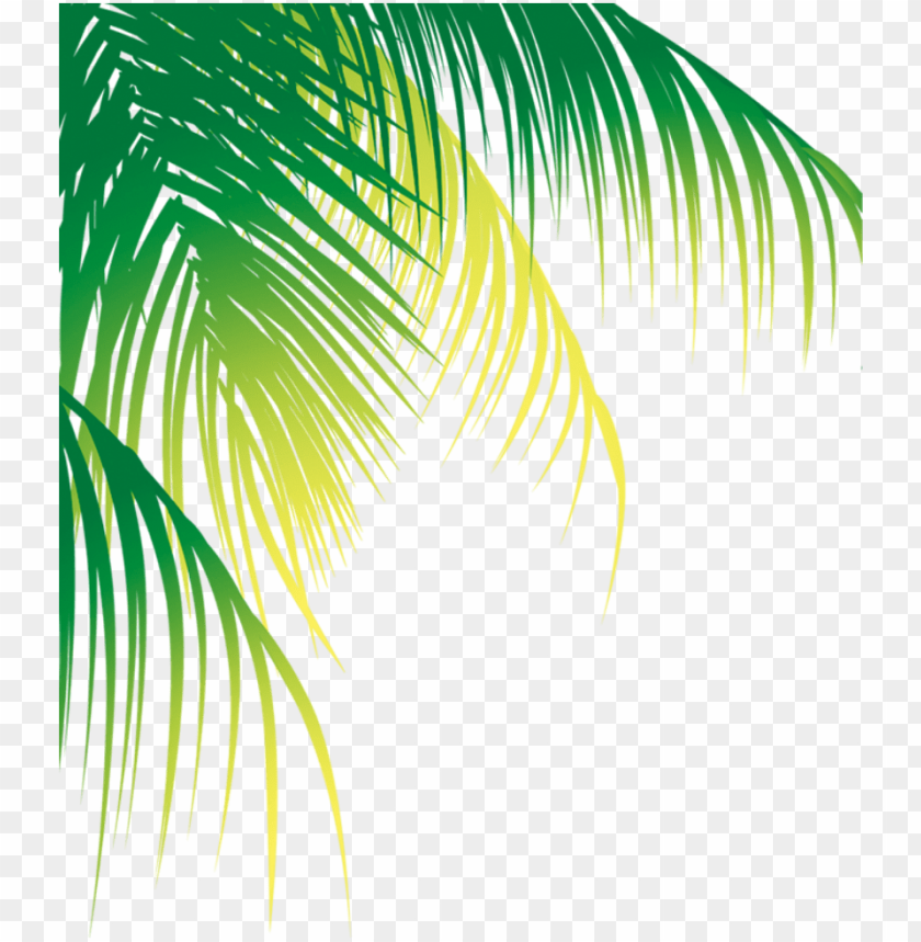 free PNG report abuse - coconut leaf vector PNG image with transparent background PNG images transparent
