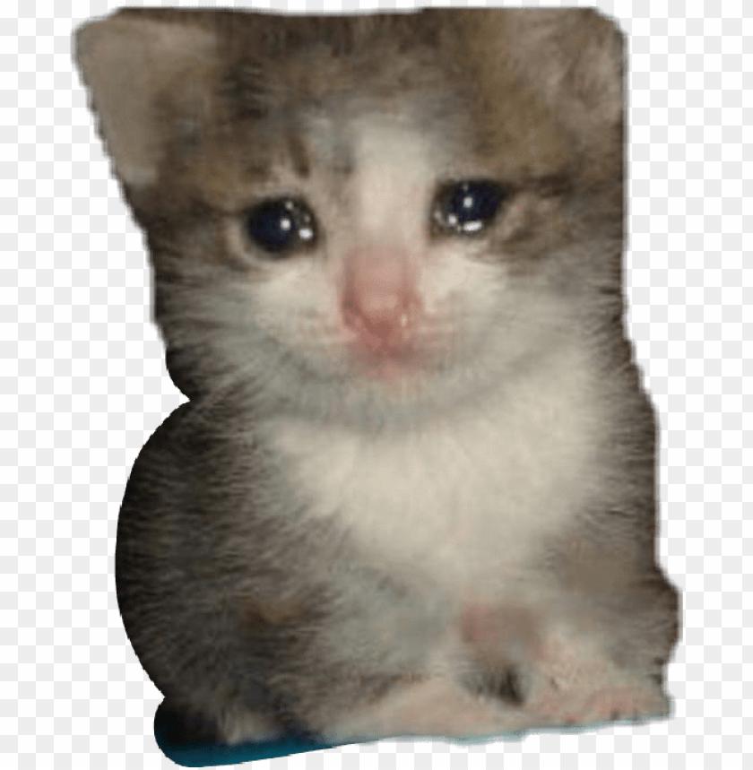 Report Abuse Sad Cat Dank Memes Png Image With Transparent