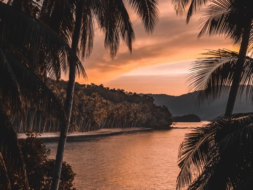 free PNG river, palm trees, twilight, landscape, tropical background PNG images transparent