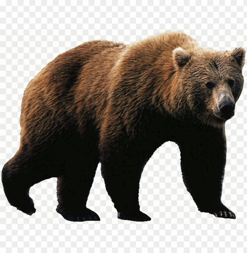 free PNG rizzly bear png download - grizzly bear PNG image with transparent background PNG images transparent
