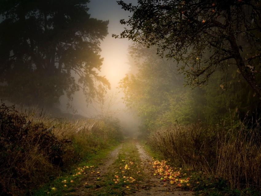 free PNG road, forest, fog, apples, trees background PNG images transparent
