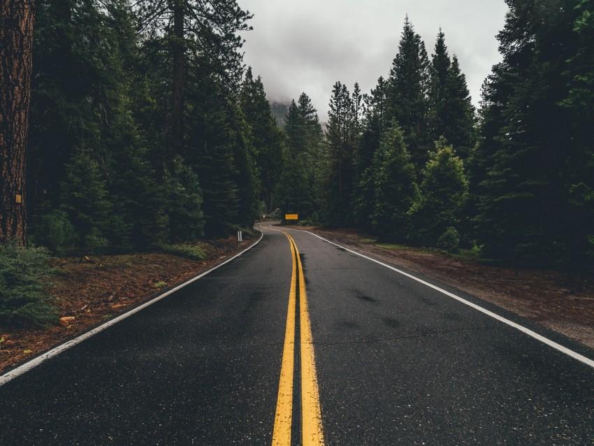 free PNG road, marking, trees, turn, asphalt, forest background PNG images transparent