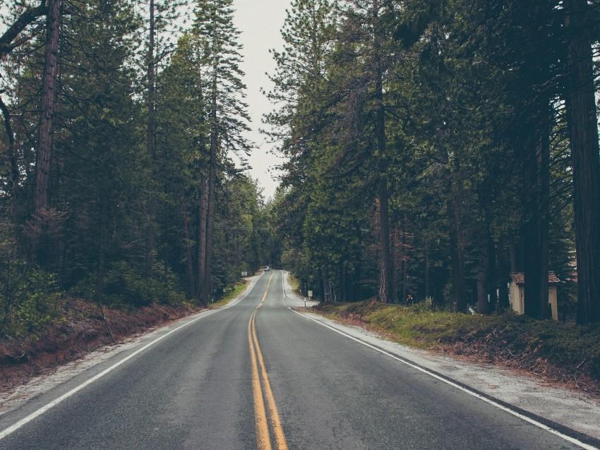 free PNG road, trees, asphalt, marking, direction, forest background PNG images transparent