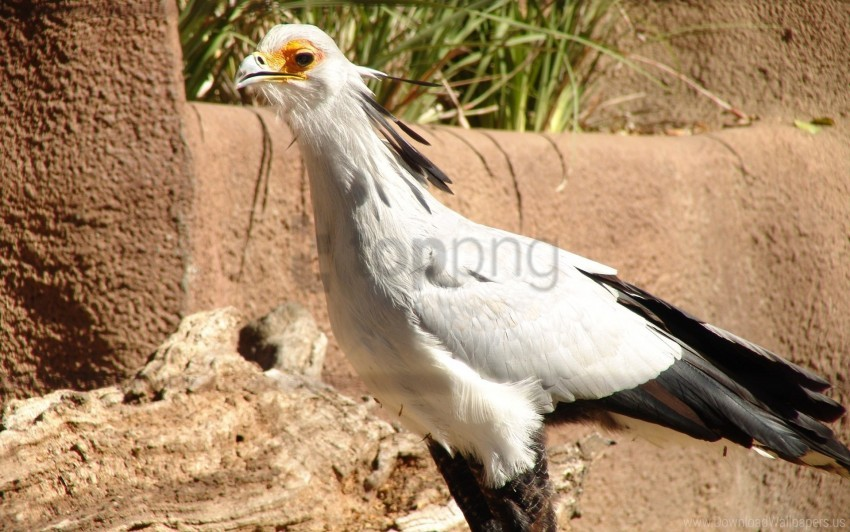 free PNG rocks, sand, secretary bird, white wallpaper background best stock photos PNG images transparent
