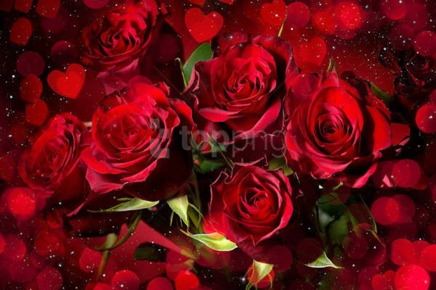 free PNG romantic red roseswith roses background best stock photos PNG images transparent
