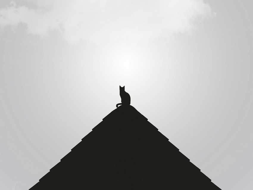 free PNG roof, cat, black, bw, minimalism background PNG images transparent