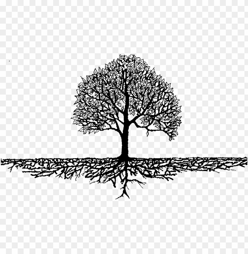 Roots Branches Family Tree Roots Png Image With Transparent Background Toppng