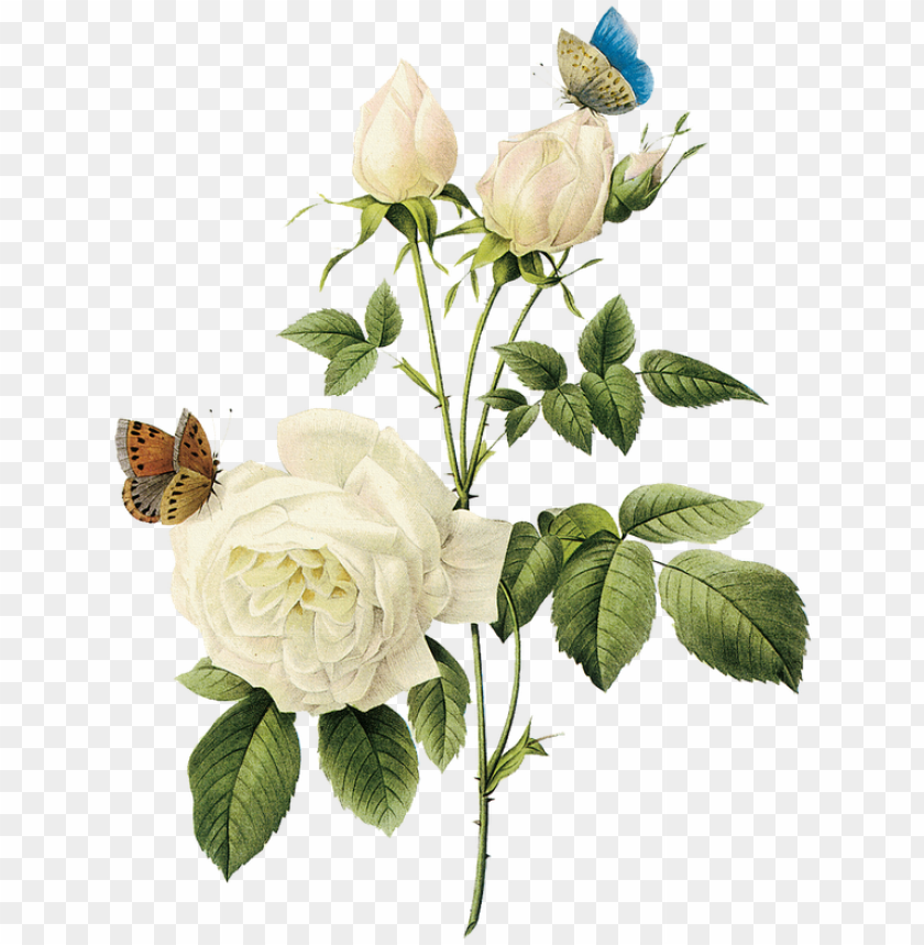free PNG rosa, rosa tan maravillosa rosa blanca - white vintage flowers PNG image with transparent background PNG images transparent