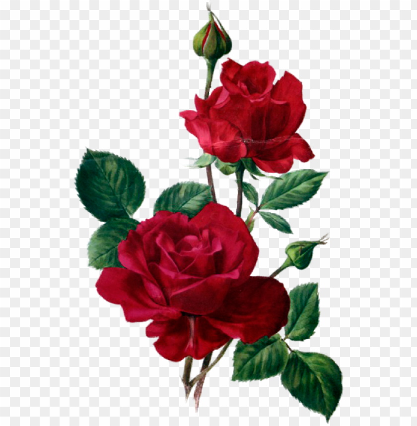 Rosas Rojas Flores Vintage Sublimados Acuarela Rose
