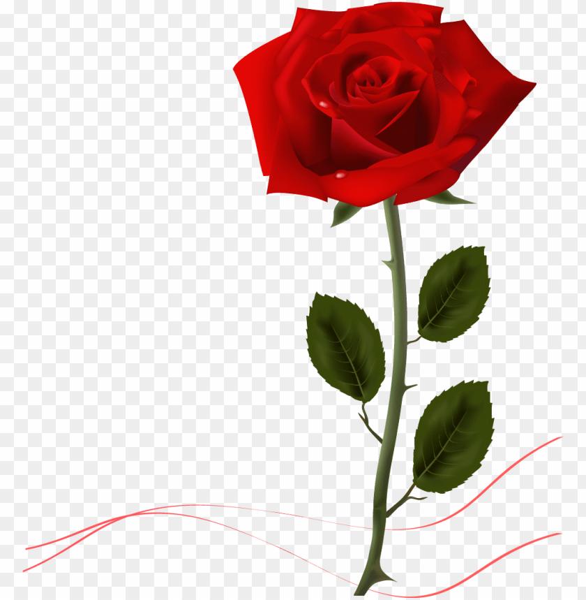 free PNG rose desktop wallpaper- rose desktop wallpaper PNG image with transparent background PNG images transparent
