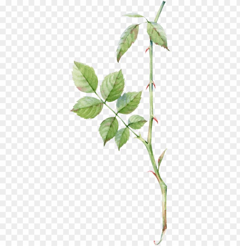 free PNG rose leaf PNG image with transparent background PNG images transparent