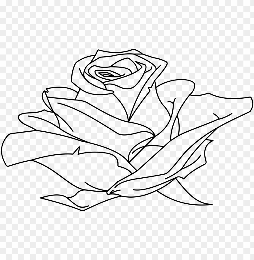 free PNG rose line drawing at getdrawings - rose line drawing PNG image with transparent background PNG images transparent