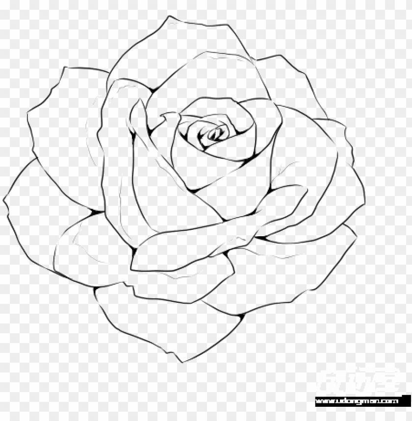 free PNG rose line drawing template - realistic rose outline drawi PNG image with transparent background PNG images transparent