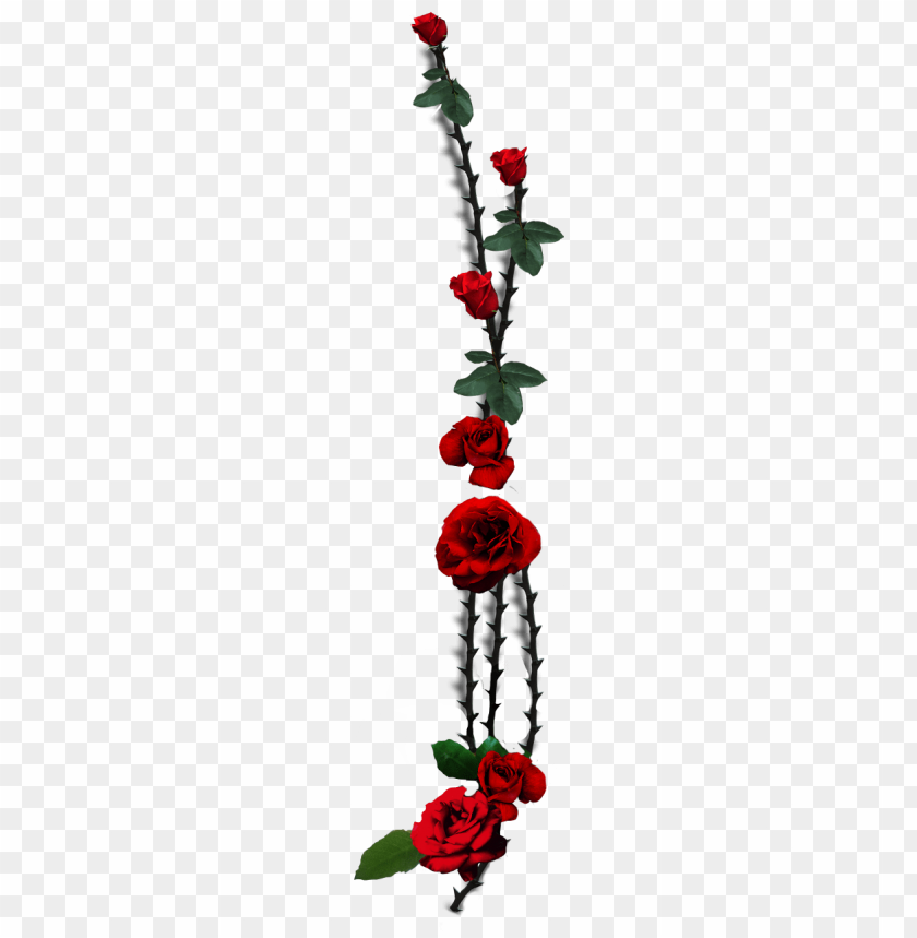 free PNG rose thorns PNG image with transparent background PNG images transparent