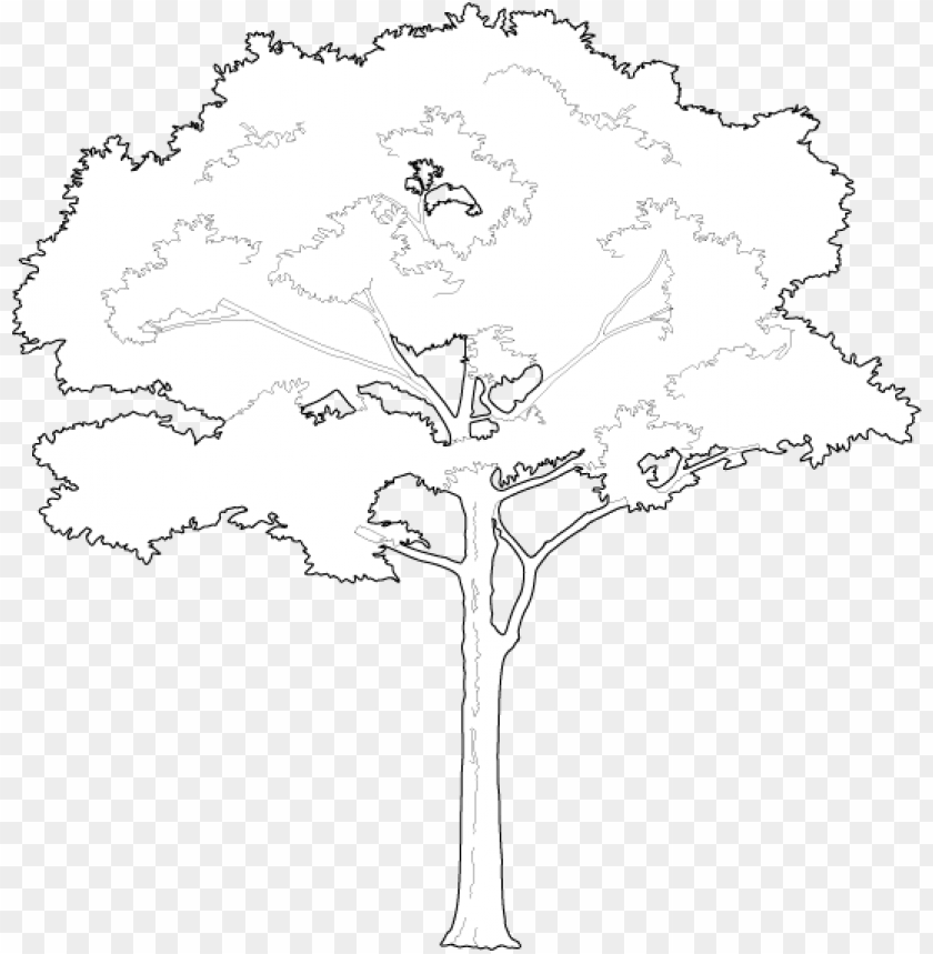 free PNG roud and tall tree 2d trees - white tree vector PNG image with transparent background PNG images transparent