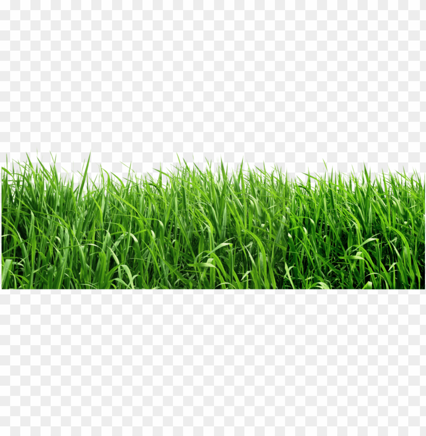 free PNG royalty free download png picture gallery yopriceville - grass png file PNG image with transparent background PNG images transparent