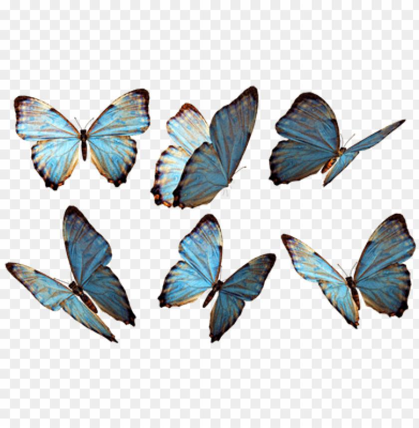 free PNG rupo de mariposas azules - imagenes de mariposas PNG image with transparent background PNG images transparent